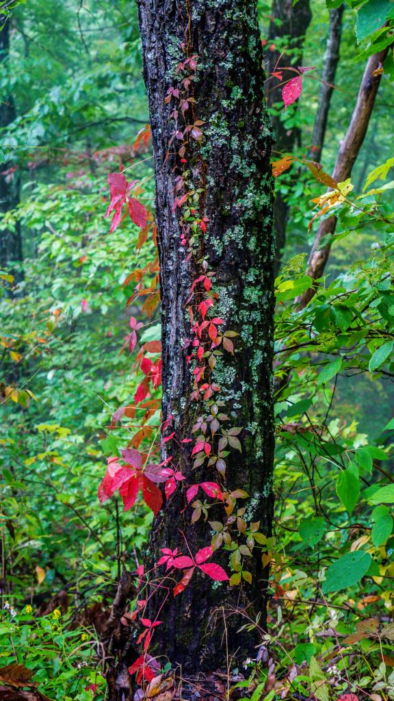 Smoky Mountains-15