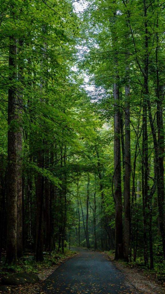 Smoky Mountains-6